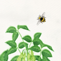 bee and plant illustration